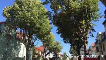 Colmar : les riverains de la rue Charles-Grad s'opposent à l'abattage de 18 tilleuls - France Bleu