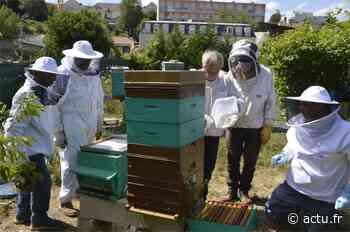 Melun. Le rucher des Carmes en bonne santé - actu.fr