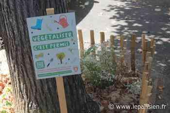 Seine-et-Marne : à Melun, c'est permis de jardiner dans sa rue - Le Parisien