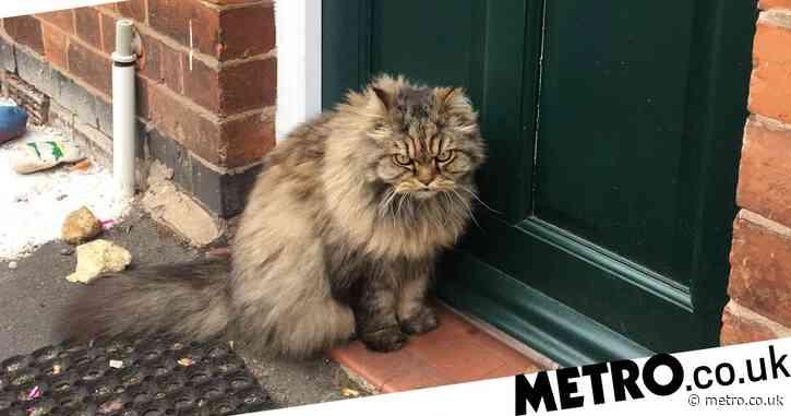 Best cat memes to celebrate International Cat Day