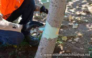 Exige regidor dar con responsables de ecocidio en La Cantera - El Diario de Chihuahua