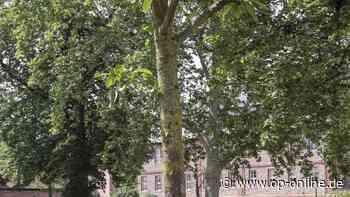Gegen die Trockenheit: Langenselbold bringt Bewässerungssäcke an jungen Bäumen an - op-online.de