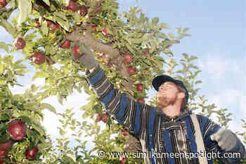Okanagan, Creston cherry and apple farms in need of workers - Similkameen Spotlight
