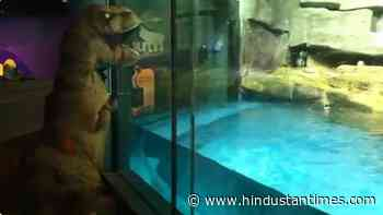 'Dinosaur' Sue snuck out to say hi to penguins Darwin and Izzy. Watch - Hindustan Times