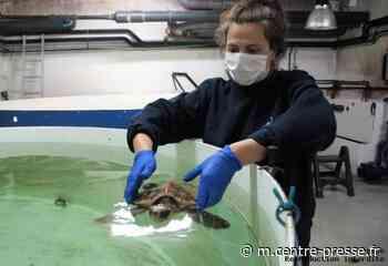 La Rochelle: au chevet des tortues - Centre Presse