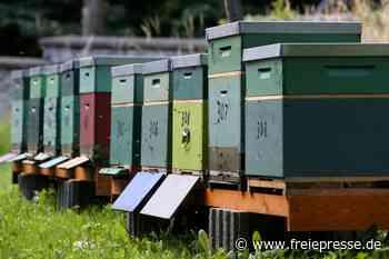 Bienenstöcke sorgen für Musik im Park - Freie Presse