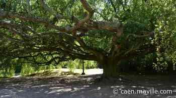 Bayeux. Qui a réalisé l'aménagement du jardin botanique au XIXe siècle ? - maville.com