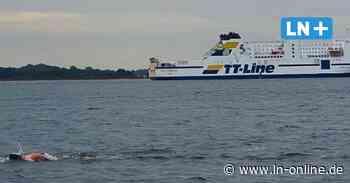 Extremschwimmer: Ohne Neoprenanzug von Kellenhusen nach Fehmarn - Lübecker Nachrichten