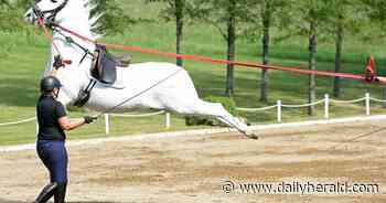 Look: Lipizzan leaps delight crowd at Tempel Farms in Old Mill Creek