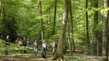 Bovenden: Waldführung durch den Friedwald Burg Plesse - HNA.de