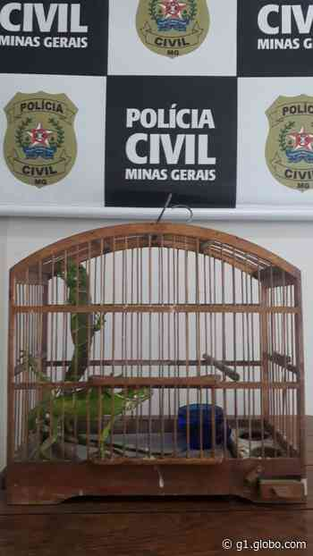 Polícia Civil apreende iguanas que foram transportadas pelos Correios em Coronel Fabriciano - G1