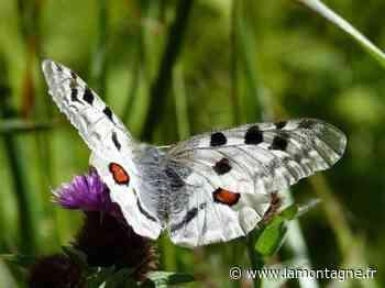 Pourquoi les fleurs du Massif central ont-elles des ailes ? - La Montagne