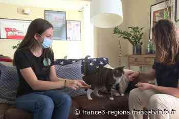 Pet-sitting : des vacances plus sereines avec la garde de chat à votre domicile - France 3 Régions