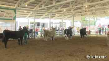 Woodbury County Fair Expo allows 4-H participants to show animals despite 2020 fair being postponed - KTIV
