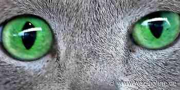 Wolfsburg und Gifhorn: Das sind die schönsten Katzenbilder der Leser - Wolfsburger Allgemeine