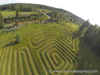 Lacombe resident creates labyrinth near Breton – Lacombe Express - Lacombe Express
