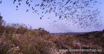 Natuur & Milieu Minder biodiversiteit, meer risico op ziektes - Eos Wetenschap