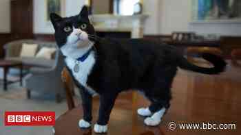 Foreign Office cat Palmerston retires to countryside - BBC News