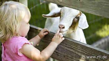 Streichelzoo-Besuch mit Kindern: Das sollten Eltern wissen - RTL Online