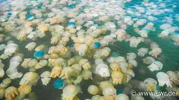 SWR2 Matinee | Die Verglibberung der Meere. | Wissen | SWR2 - SWR