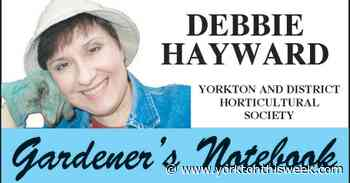 Gardener's Notebook - Head online for annual hort. show - Yorkton This Week