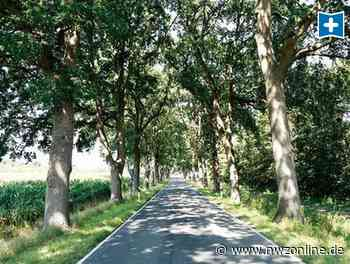 Bäume An Resthauser Straße: Abholzung in Cloppenburg an schwach befahrener Straße? - Nordwest-Zeitung