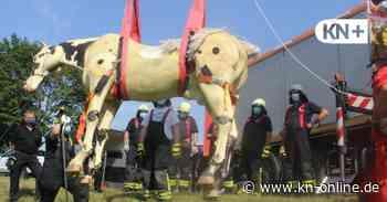 Rendsburg: Feuerwehr trainiert Rettung von Kühen und Pferden - Kieler Nachrichten