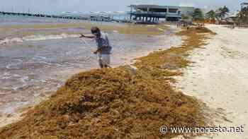 Empresarios aseguran que no funciona la barrera antisargazo en Playa del Carmen - PorEsto