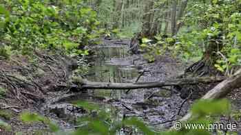 Absinkendes Grundwasser : Wie die Parforceheide gerettet werden könnte - Potsdamer Neueste Nachrichten