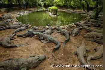 India's largest crocodile park strapped for cash after coronavirus lockdowns