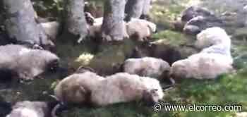 Un rayo mata a 32 ovejas y una vaca en la localidad navarra de Sorogain - El Correo