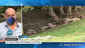 Vídeo: Un rayo mata a 32 ovejas y una vaca en Sorogain; 9 de agosto de 2020 | Sociedad | EiTB - EiTB Radio Televisión Pública Vasca