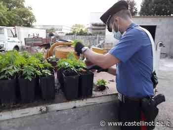 In Carcere a Velletri il 23enne di Anzio che aveva trasformato casa in una centrale della droga - Castelli Notizie