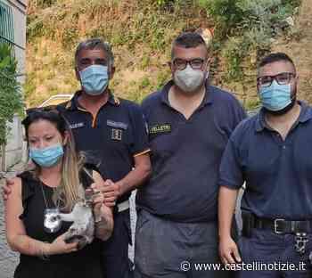 Velletri, salvato un gattino che era precipitato in un cortile sotterraneo - Castelli Notizie