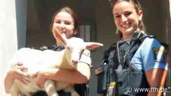 Kassel: Vier Ziegen lösen Polizeieinsatz aus - HIT RADIO FFH