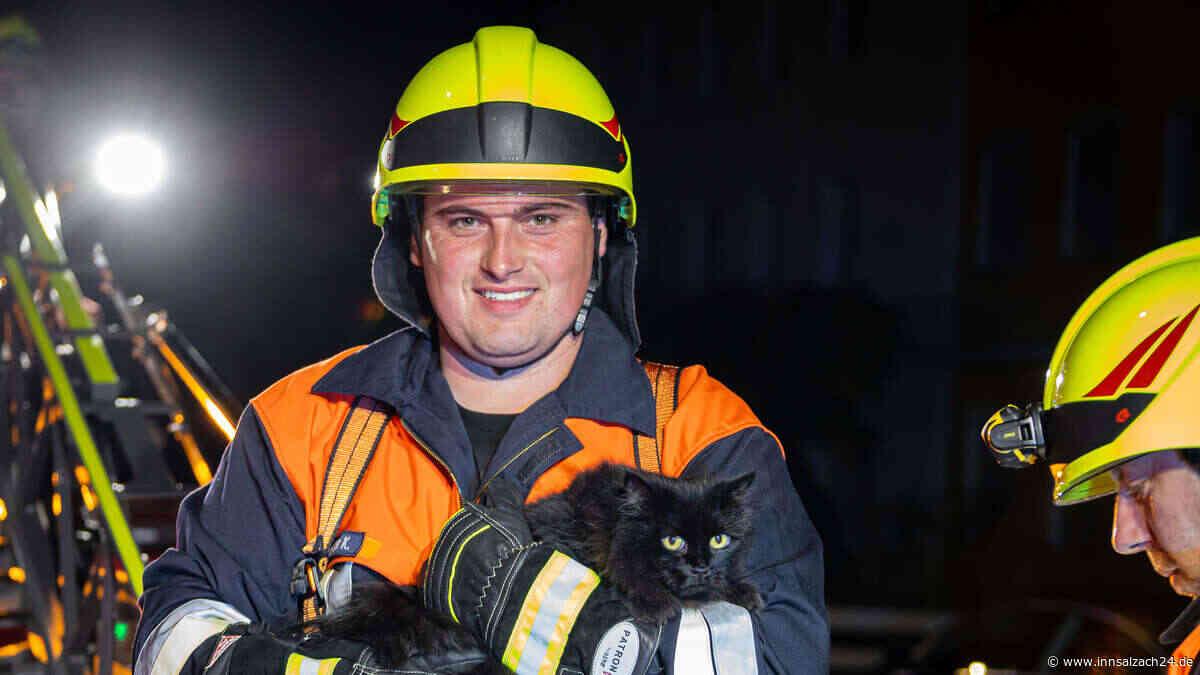 Feuerwehr rettet Katze von Dach bei Einsatz in Burghausen in Wackerstraße - innsalzach24.de