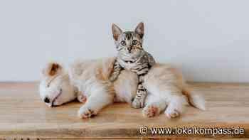 Was es alles gibt: Weltkatzentag 8. August - Kamen - Lokalkompass.de