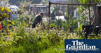 Interest in allotments soars in England during coronavirus pandemic - The Guardian