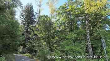 Straubenhardt - Der trockene Boden hat kaum Reserven - Schwarzwälder Bote