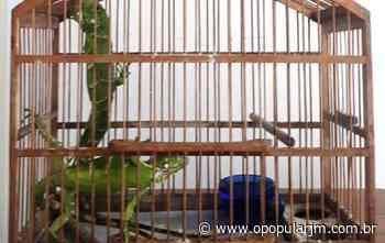 Iguanas são resgatadas de cativeiro em Coronel Fabriciano - Notícias