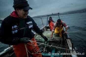 Pescadores artesanales se oponen al traspaso de la Subsecretaría de Pesca y Acuicultura al Ministerio de Agricultura - El Desconcierto