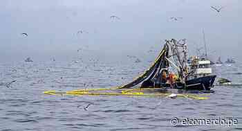 Sector pesca: pasos para recuperar el liderazgo de la producción para consumo humano en el Perú - El Comercio Perú