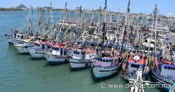 Los permisos para la pesca comercial se amplian de 2 a 3 años en Mazatlán - DEBATE