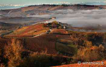 Cooperative, Terre del Barolo la migliore d'Italia, Terlano al top in Alto Adige - WineNews