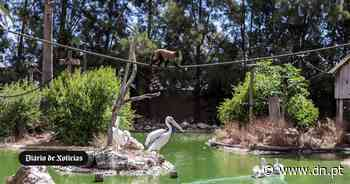 20 anos do Zoo de Lagos. O sonho de criança de Paulo - Diário de Notícias - Lisboa