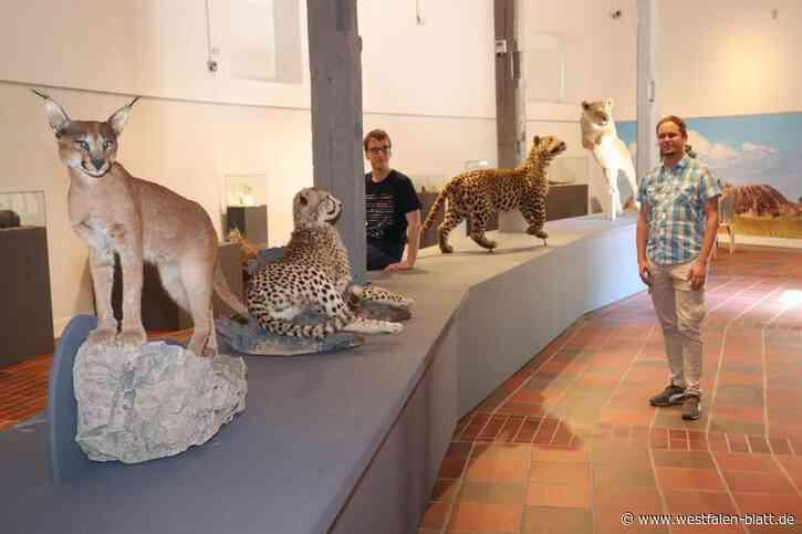 Paderborn: Catwalk mit Leopard und Löwin
