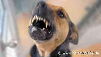Garching: Polizei sucht Hundebesitzer nach Biss von Hund - chiemgau24.de