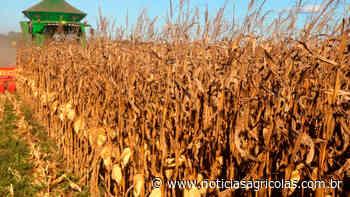 Primeiras áreas colhidas de milho em Laguna Carapã/MS produziram entre 40 e 70 sacas por hectare - Notícias Agrícolas