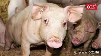 Saale-Holzländer Landwirte für Schlachthöfe in der Region