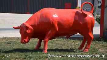 Soulages-Bonneval : le taureau d'Aubrac voit rouge avec la canicule ! - Centre Presse Aveyron